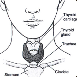 Diagram of Thyroid Gland and Optimization